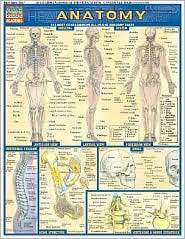 Anatomy Laminate Reference Chart: The Most Comprehensive All In One
