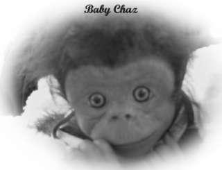 Lifelike Newborn Realistic baby Chimpanzee Monkey Orangutan Chimp OOAK