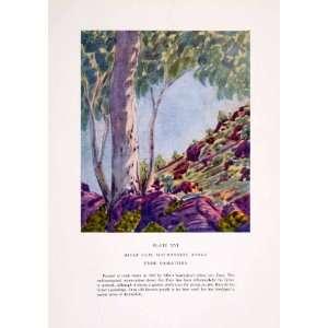 1952 Color Print E. Namatjira Art Eucalyptus Gum Tree MacDonnell Range