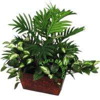 21 ARECA HOYA MIX GREENERY DECORATIVE POTTED PLANT 75