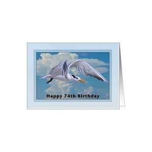Happy Birthday, 74th, Royal Tern Bird Card Toys & Games