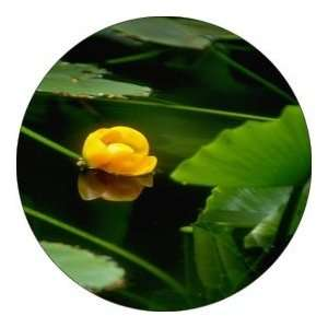 ROUND   Designer Coasters Flower/Flowers/Floral   (CRFL 223) Home