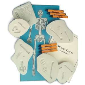Skullduggery   Human Traces   Classroom Science Kit Toys
