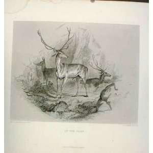 Stag In Glen C1880 Steel Engraving Landseer Old Print
